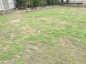 解体後約1ヶ月で草ボーボー