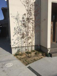 1ヶ月後の玄関まわりの植栽の様子