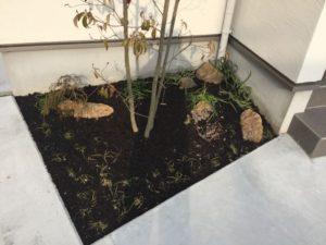 玄関周りの植栽にもバーク堆肥をしました