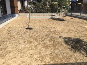 庭にクラピアを植えました