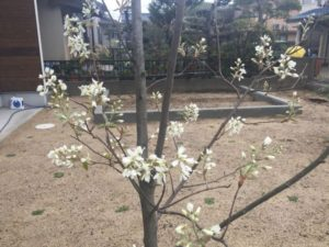春が来た!2017年4月の植栽の様子