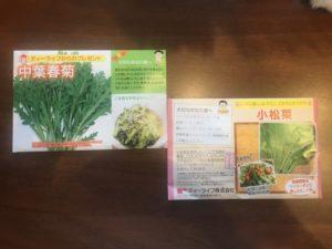 小松菜と中葉春菊の種をを植える