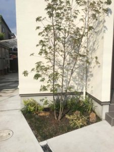 玄関横の低木をシャキット!