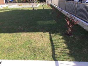 クラピアを植えて、約32週間後の様子