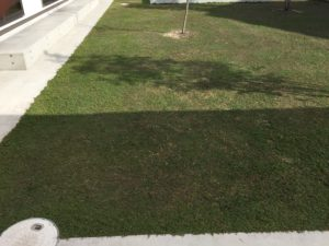 クラピアを植えて、約34週間後の様子