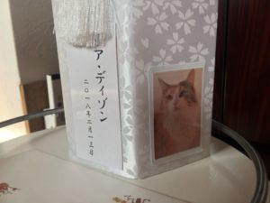 ありがとう!愛猫リア2