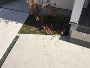 今度は誰?玄関横の植栽が...。