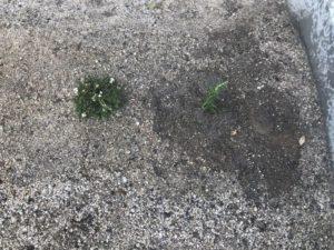 また菜園スペースに掘った跡が...。