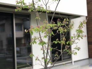 2018年4月の植栽の様子