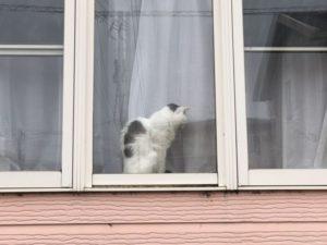 猫のいるお家