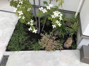 植栽にバーク堆肥をしました