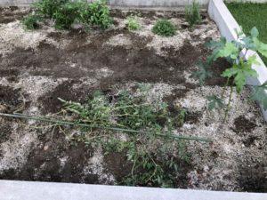 菜園スペースの草取り