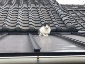 田尻の屋根の上の猫