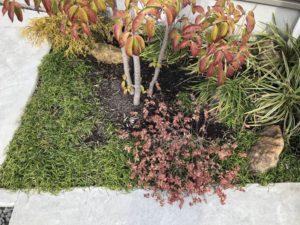 2月の植栽の様子
