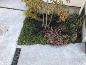 玄関脇の植栽に穴