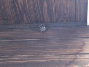 玄関の蜂の巣を駆除!