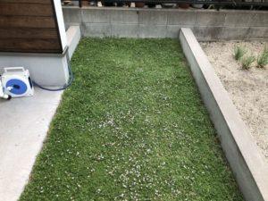 菜園スペース周りのクラピアのランナーカット