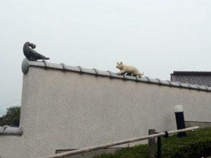 塀に鳩が留まっている家