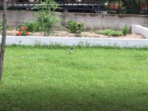 我家の庭に小鳥